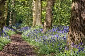 Dufton - Flakebridge Woods